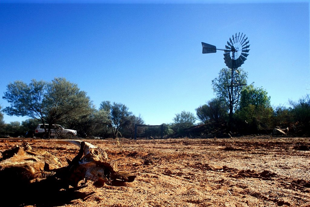 Windmill and skulls, cattle station
