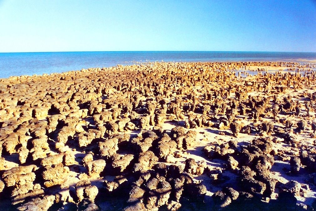 billions of years, Shark bay