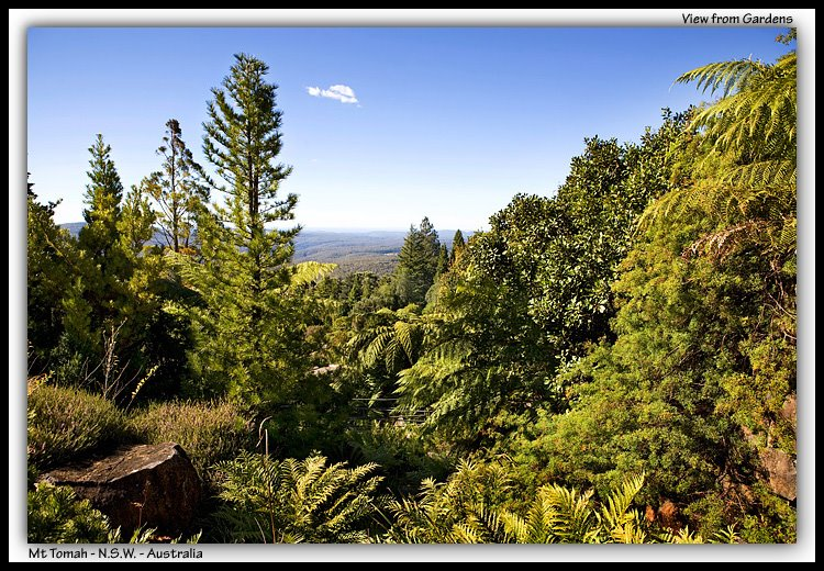 View from Mt Tomah Botanic Garden