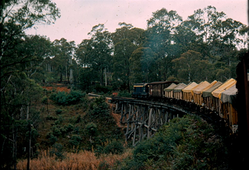 T Class on Up Cudgewa Goods near Shelley, 1978