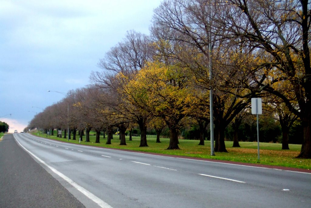 Tree lined Princes Hwy - Camperdown, Victoria