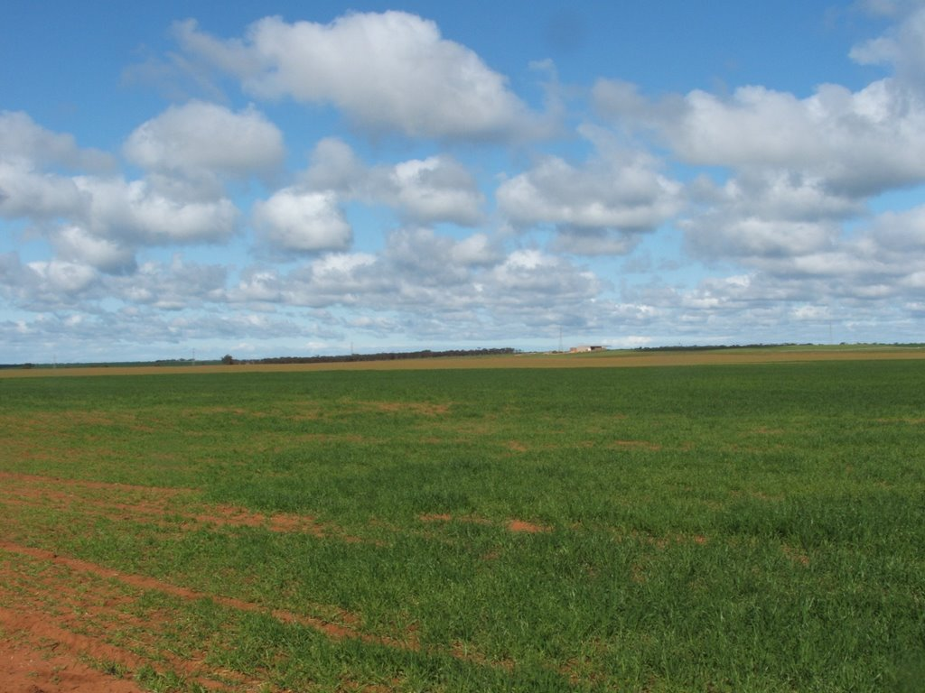 Nortern Heights Mannum, wheat feild