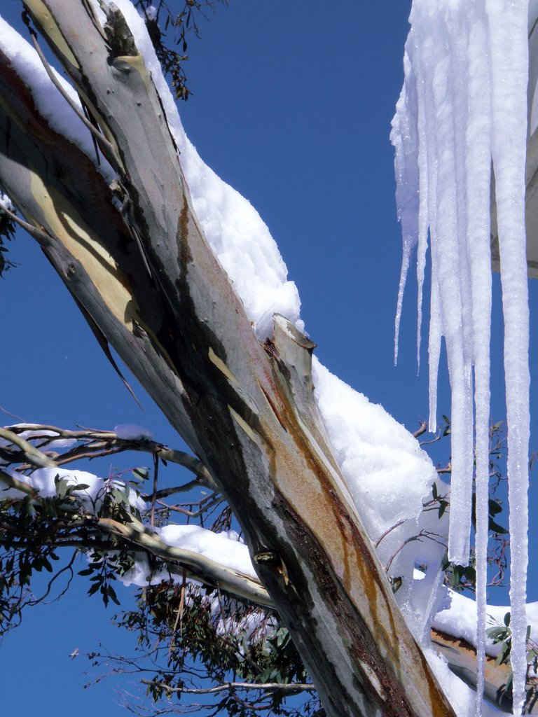 Mount Buller Snow Colors Icicle