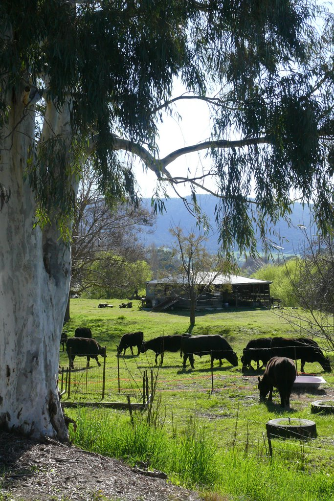 Farming scene near Koetong, Upper Murray Valley