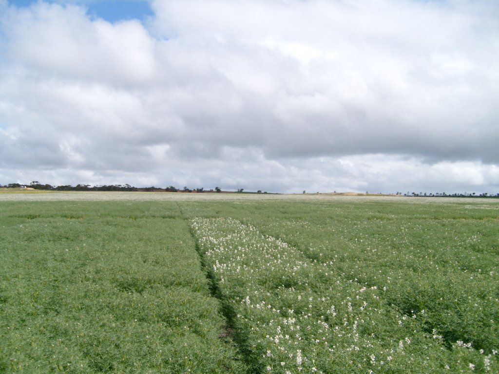 Wongan Hills, South-west Western Ausralia