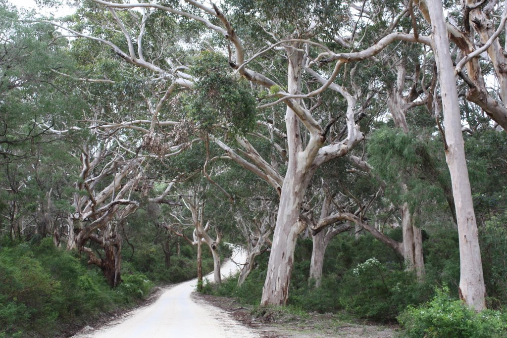 Boranup Karri Forest near Margaret River W. A. (or Enchanted Forest)
