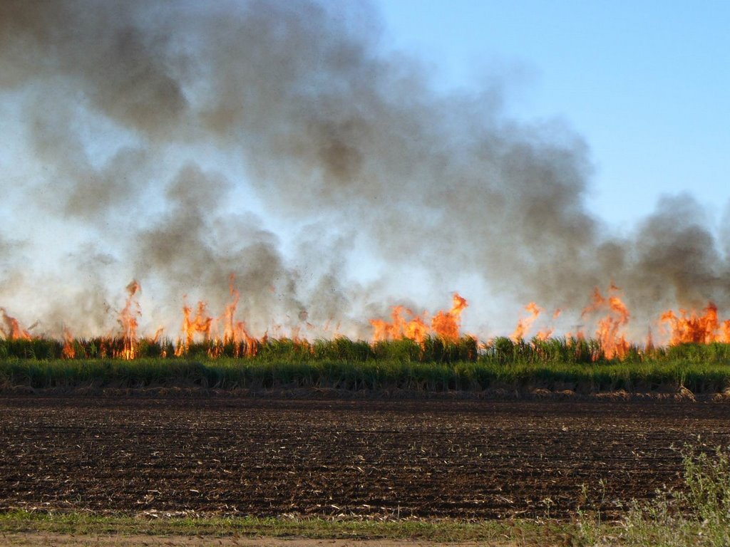 Sugar cane fire near HomeHill