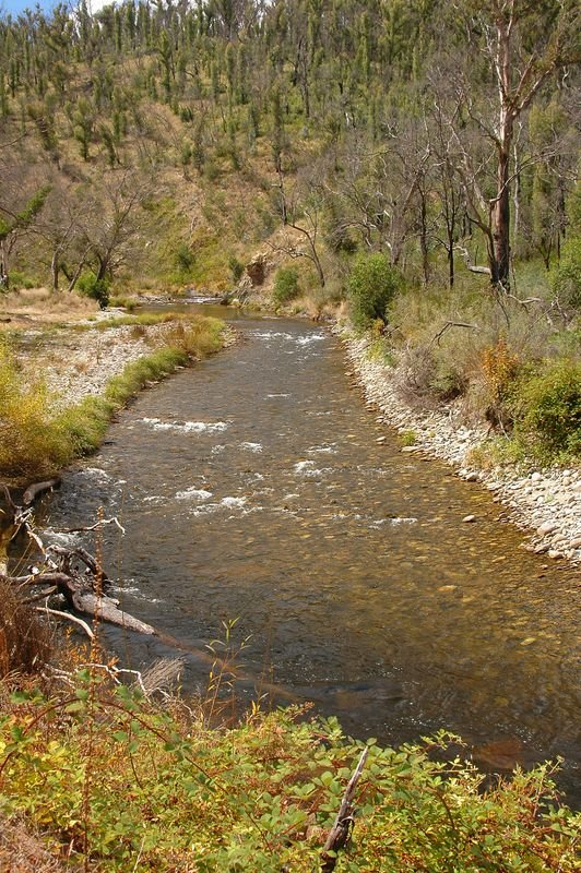 River from Omeo Hwy near Anglers Rest