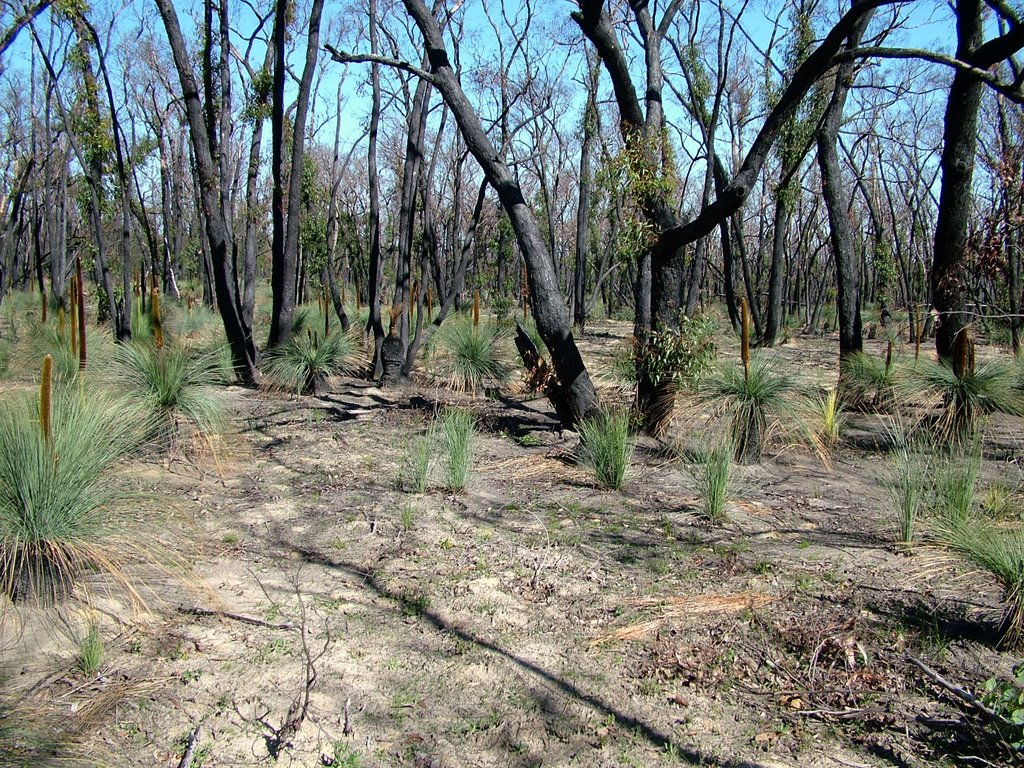 Regeneration after fire, Brisbane Ranges Aug 2007
