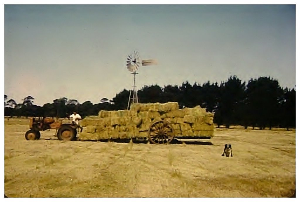 Hay carting, Woodhouse, Dunkeld ~1968
