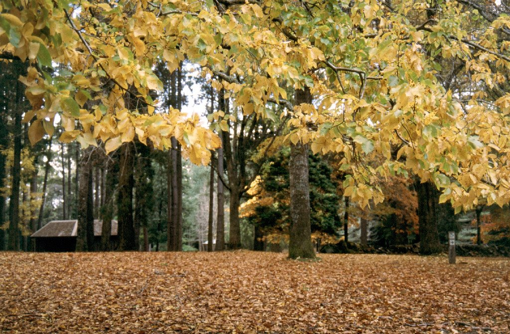 Autumn at Hollybank