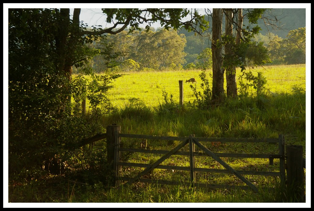 Farm gate with kangaroo