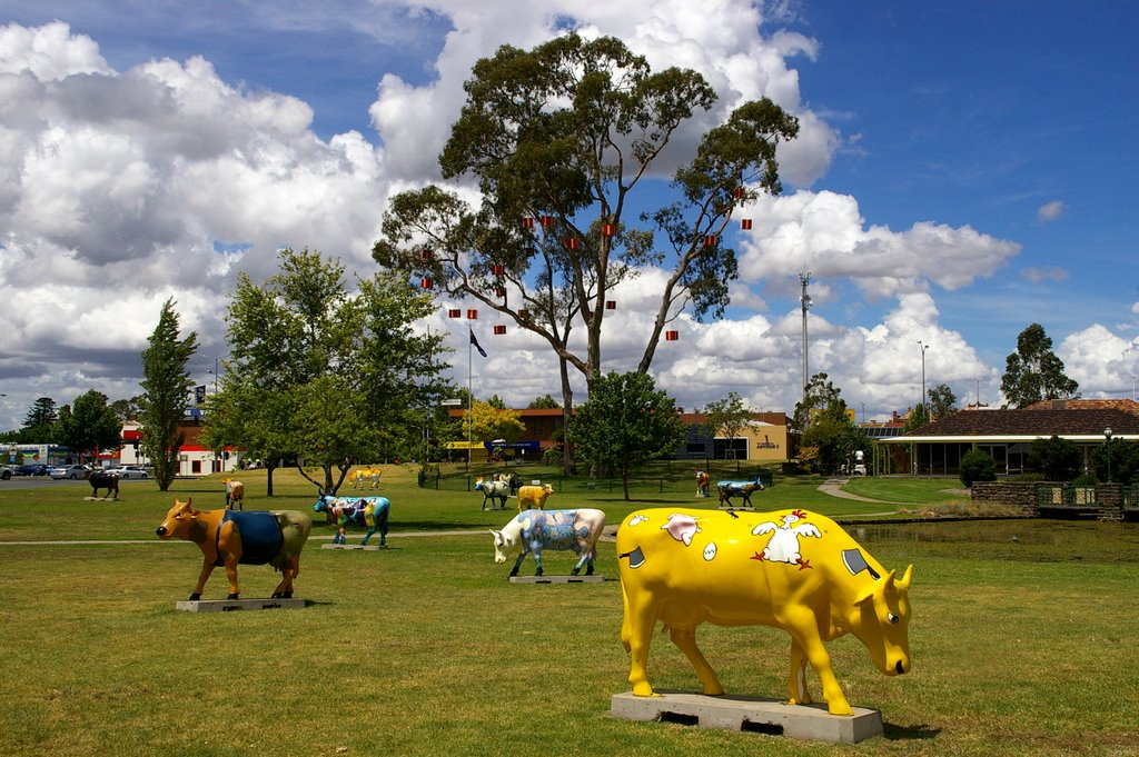 Mob of Cows near Shepparton Art Gallery
