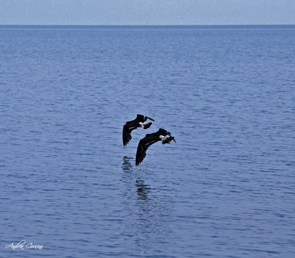 two birds flying over the water