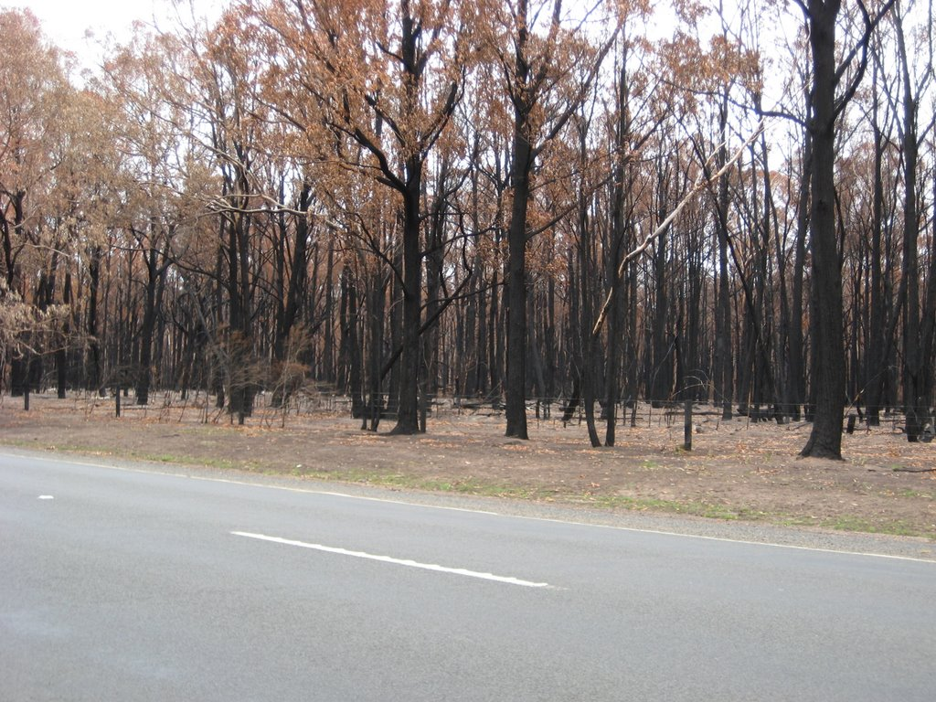 Black Saturday - Won Wron Bushfire Aftermath
