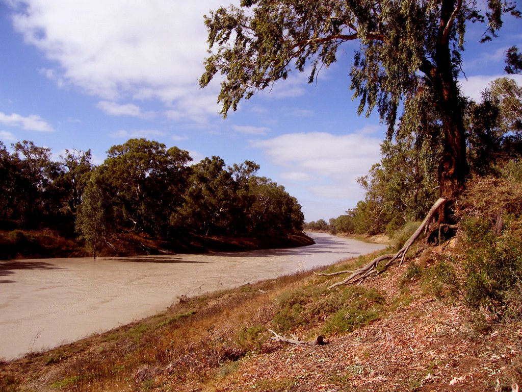 Darling River - Wilcannia