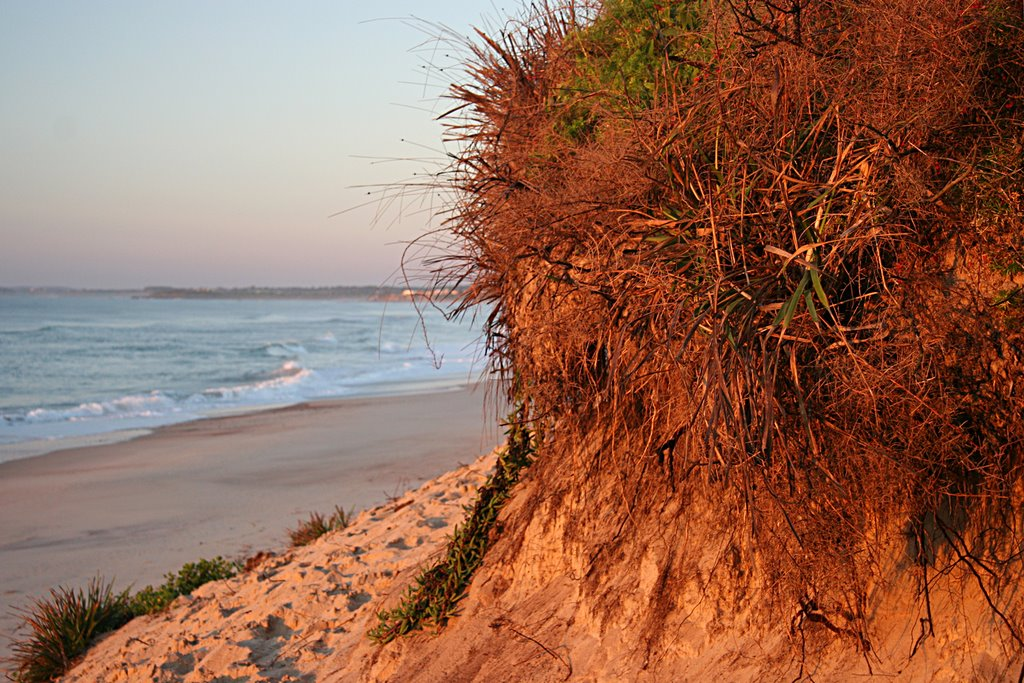 The first rays of dawn illuminate the dunes at Old Bar beach, NSW