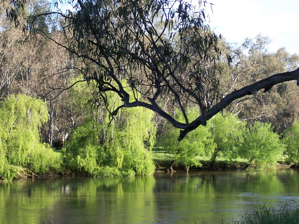 Murray River at Howlong, NSW, Australia