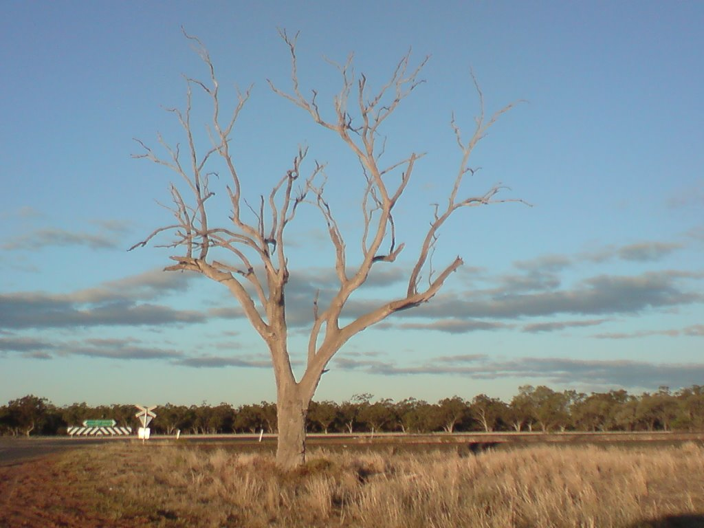 Middle of nowhere - Love this tree!!