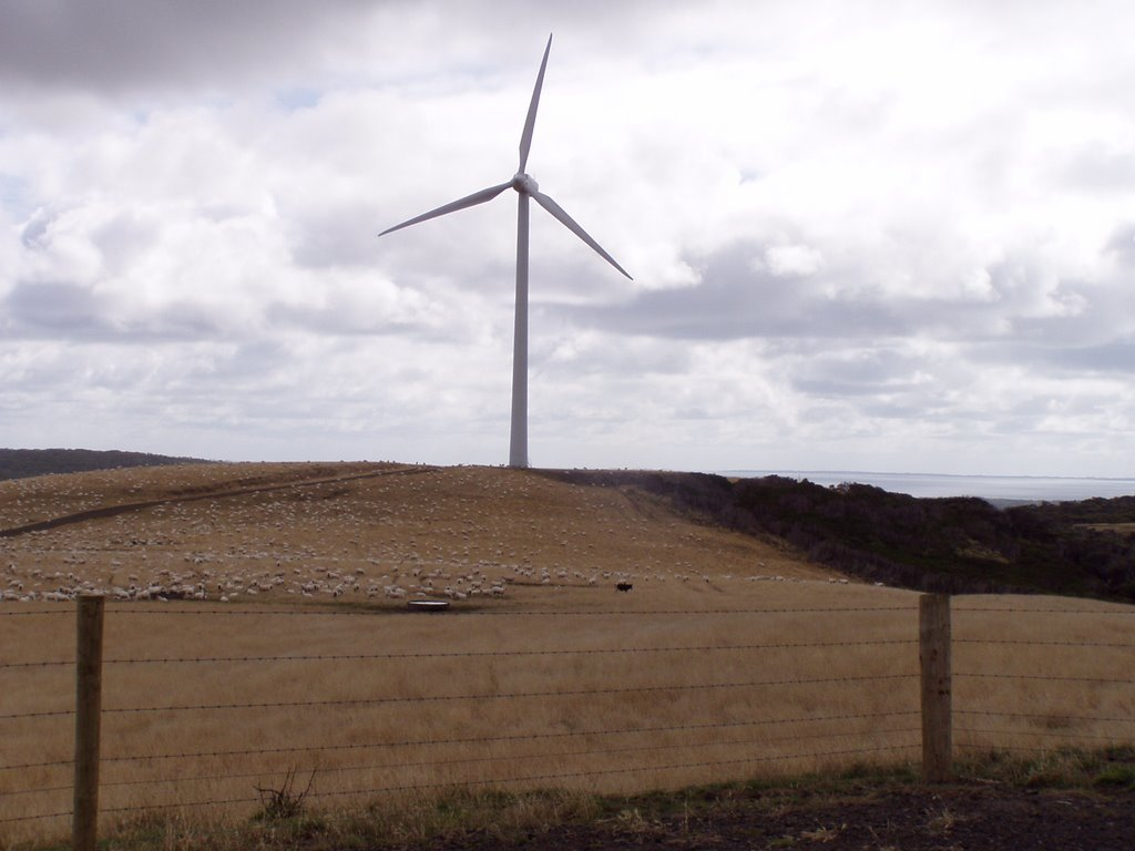 A Wind Turbine at Woolnorth