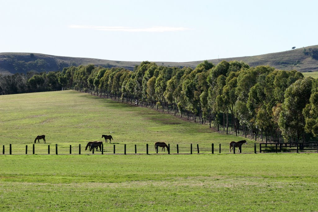 Hunter Valley Thoroughbreds, NSW