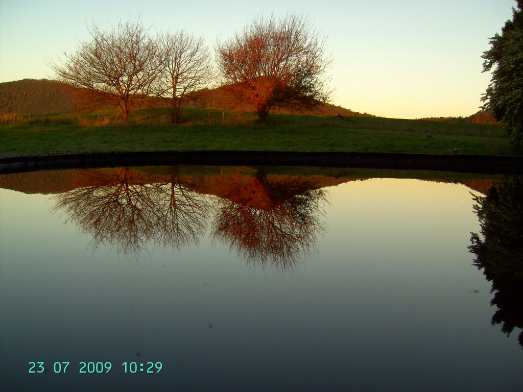 Trees in my paddock with the dial range in the background, the reflection is in the water of my tank =)