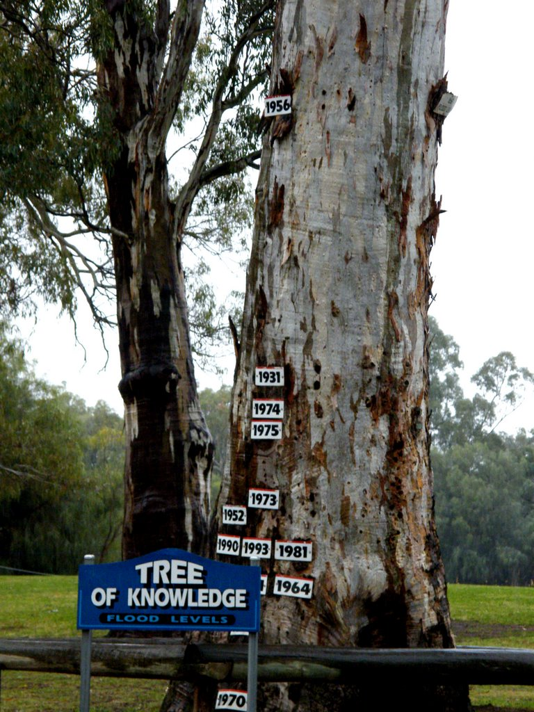 Loxton Tree of Knowledge