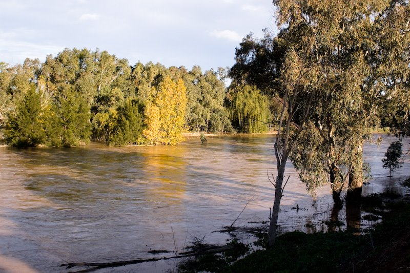The Castlereagh River at Gilgandra after the June 2007 rain.