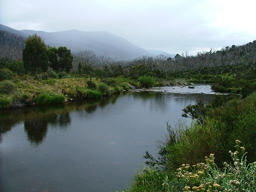 Thredbo River at Bullocks Flat (downstream view)