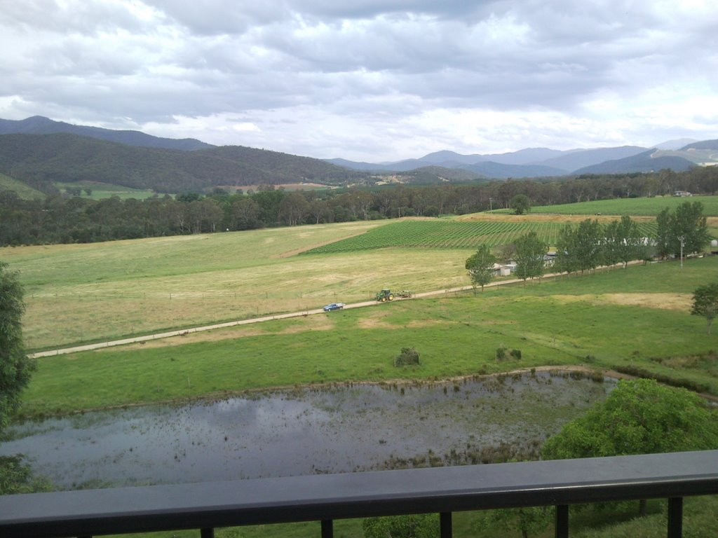 Emu and Deer farm near Myrtleford