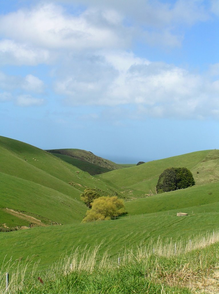 spring hills on busty road, apollo bay, great ocean road