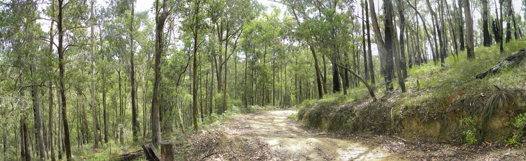 A Track in the Aussie Bush