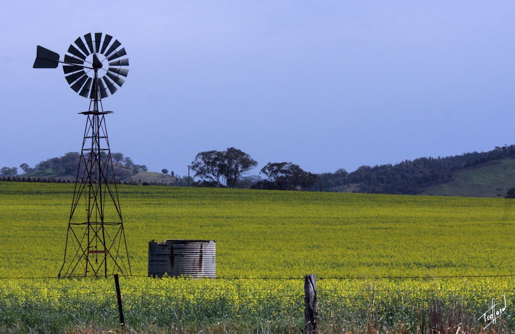 Windmill in a Rape field