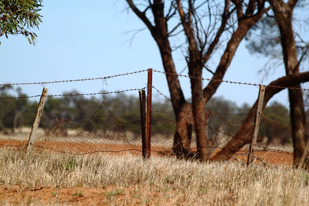 Weathered Mallee Fencing