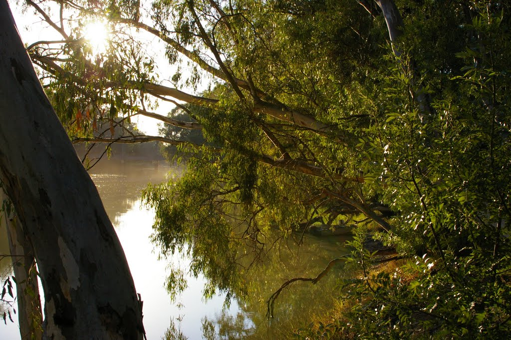 Early morning on the Murray River near Murrabit