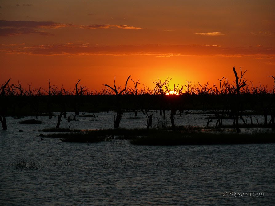 Sunset Barron Box Swamp