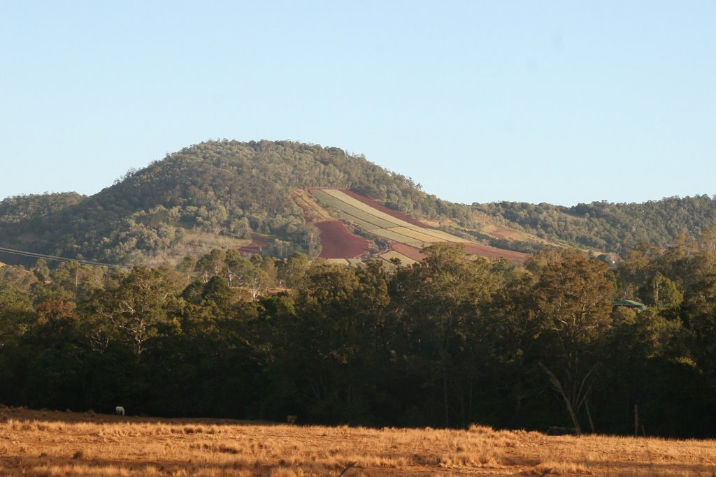 Big Baldy dressed by pineapples rises above Amamoor Creek, Dagun, Queensland