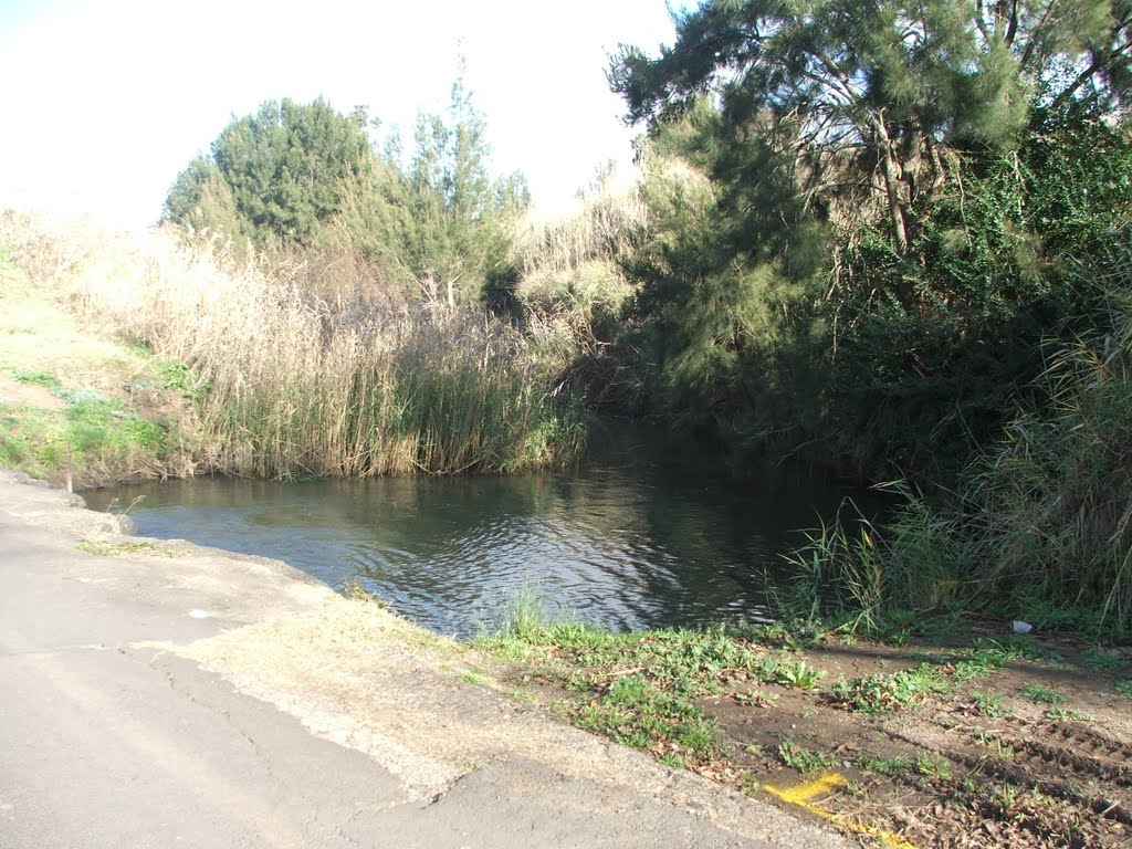 Condamine River-Backhouse Rd, downstream