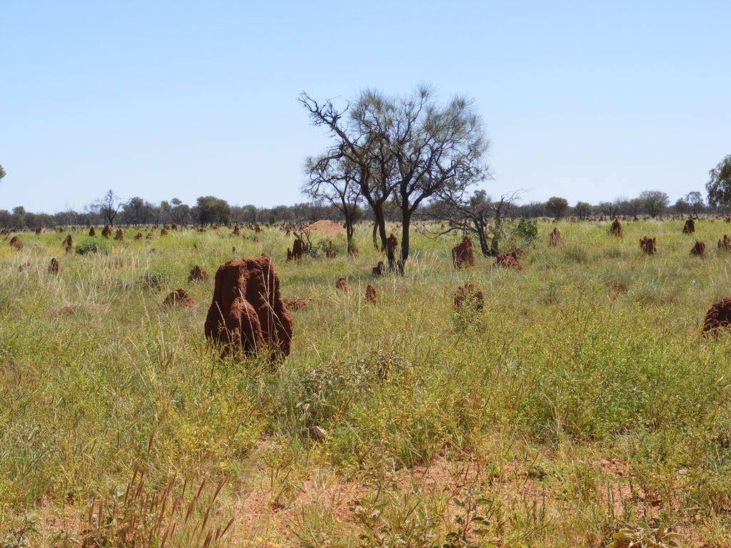 Termite Mounds, Tanami Track, NT