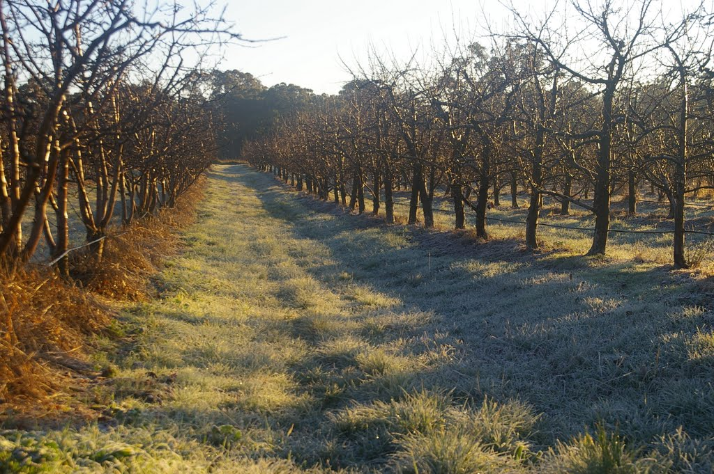 More frost, more apple trees!