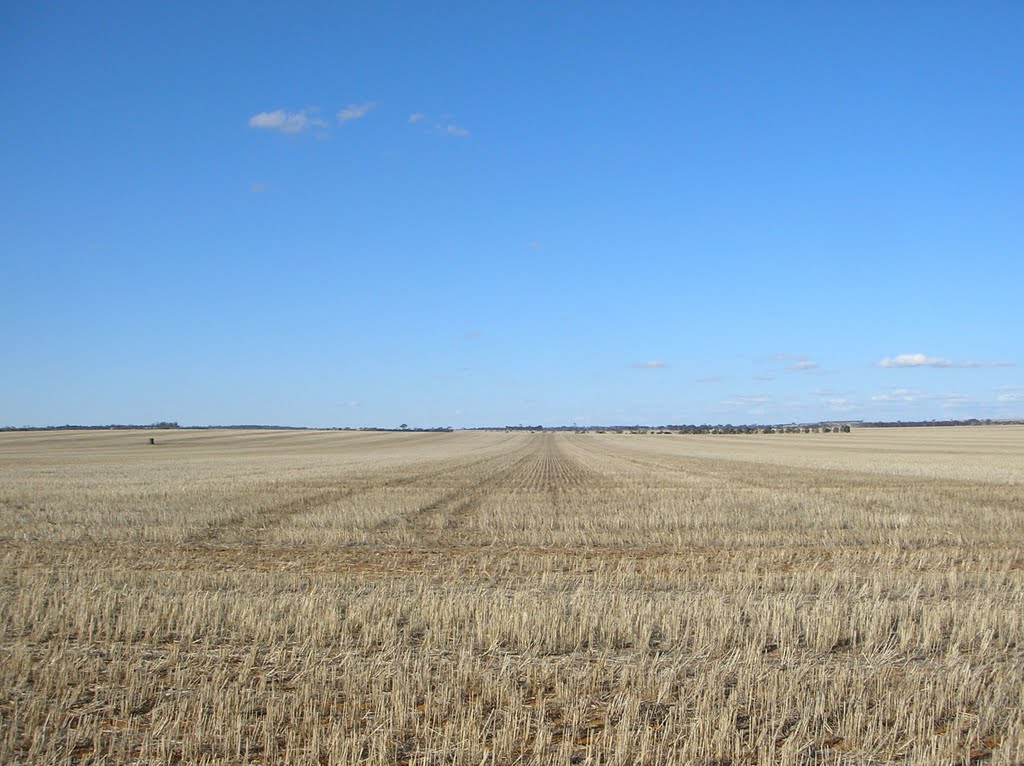 Dry Stubble from 2009 Harvest