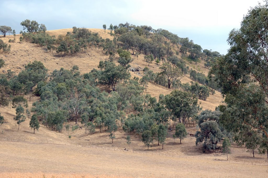 Murray hillside near Burrowye