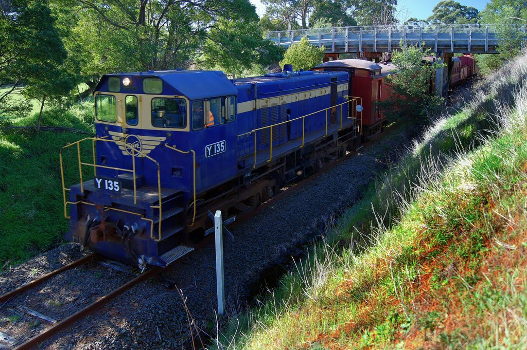 South Gippsland Tourist Railway Y135 diesel locomotive under the Jeetho Rd bridge (2010)
