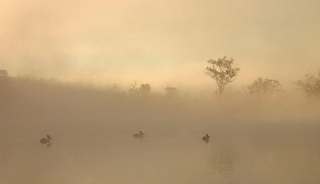 Early Morning on the Murray River
