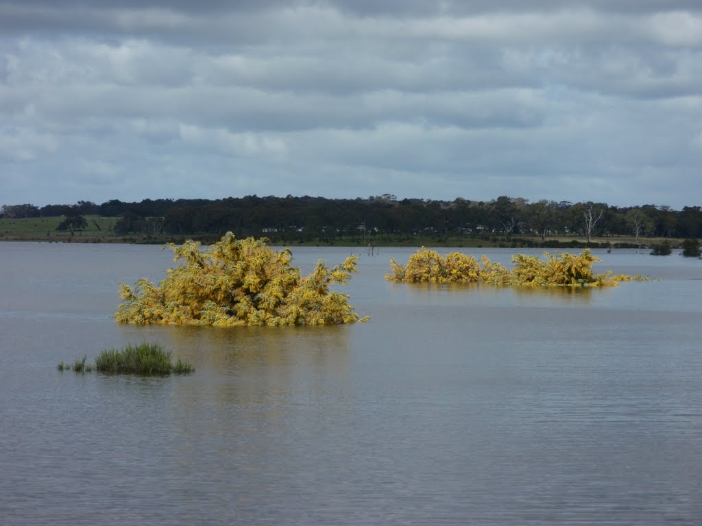 Flooded wattles
