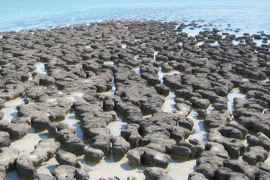 Stromatolites at hamelin pool-2