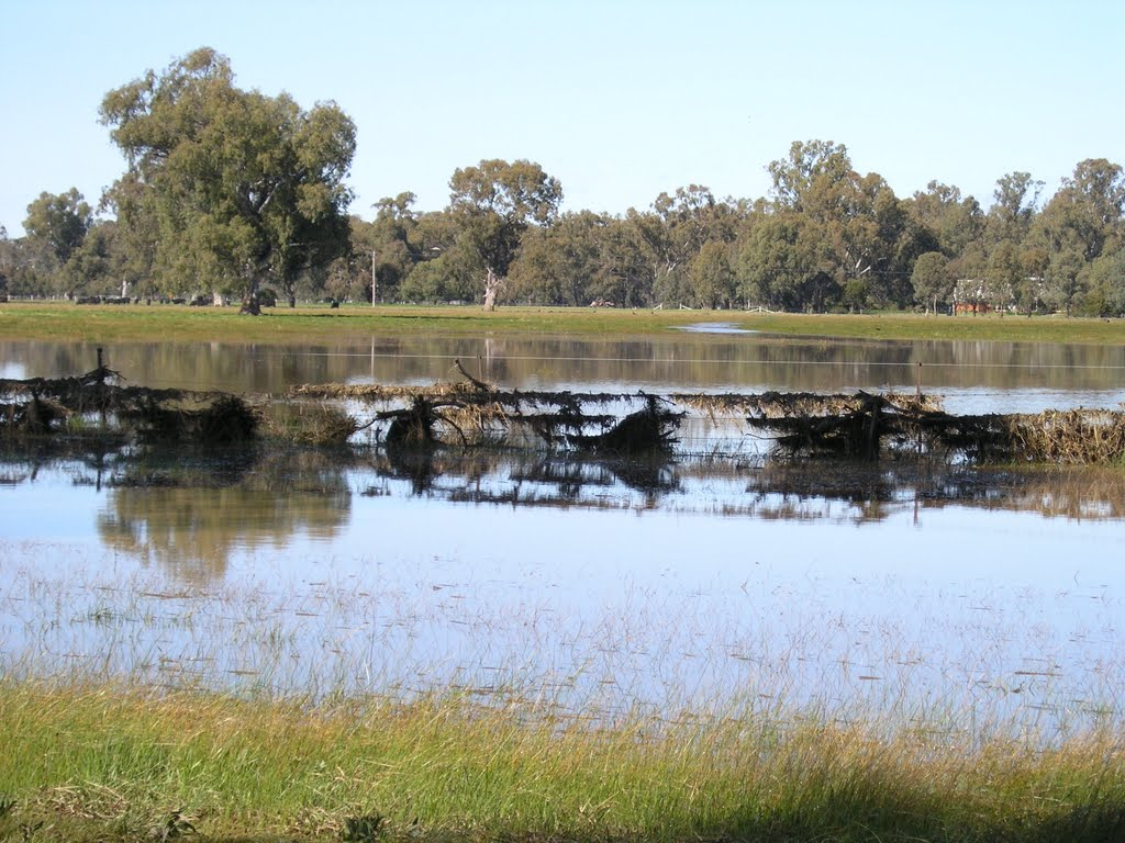 Flood debris on fencing near Goomalibee - Sept 2010