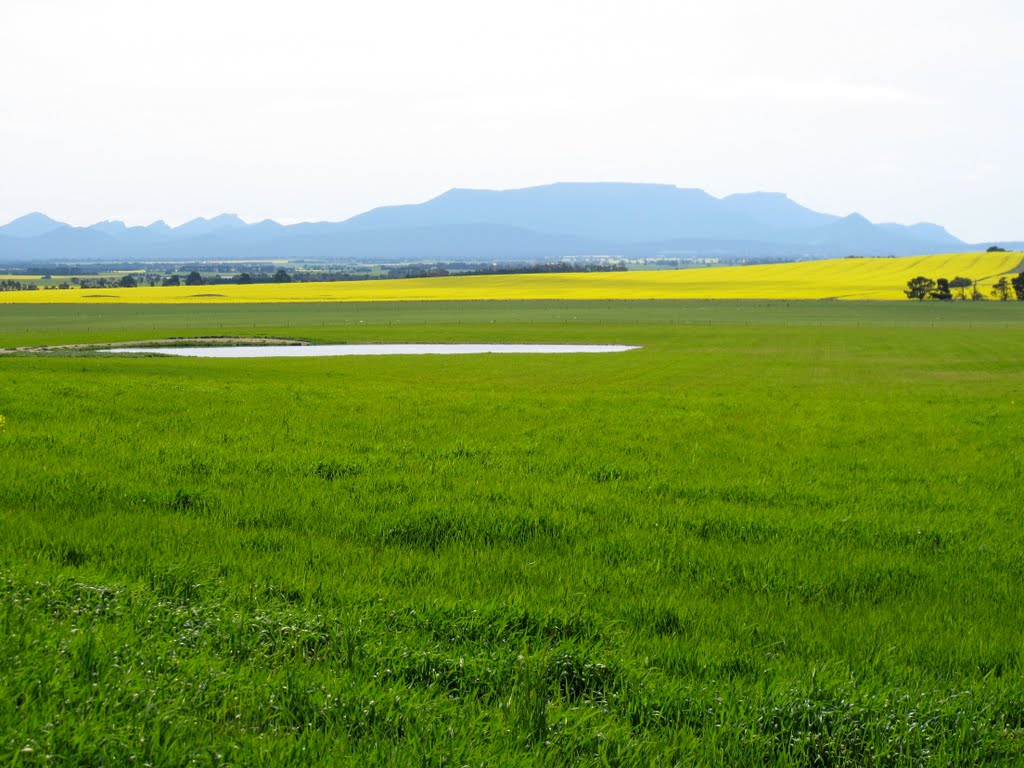 Canola and the Grampians