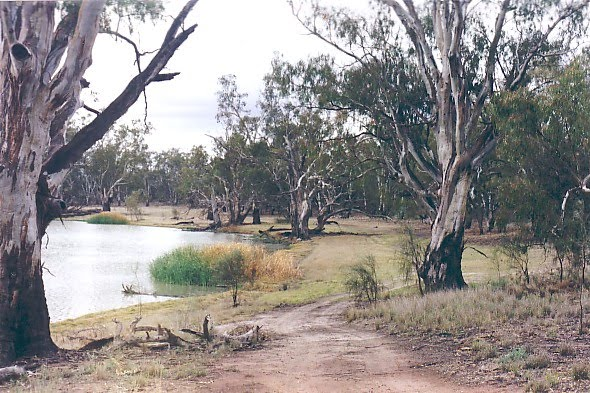 Margooya Lagoon, Robinvale State Forest