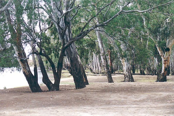 Beggs Bend, Robinvale State Forest